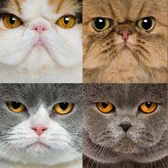 Don't Give me That Look! | Cute Kitten | Kittens | Cat Smirk