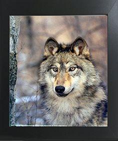 Timber Wolf Wild Eyes Wildlife Animal Contemporary Black ... https://www.amazon.com/dp/B01N7ITQVZ/ref=cm_sw_r_pi_dp_x_7VbRybVFPTX71