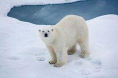 Diferencia entre el Polo Norte y el Polo Sur