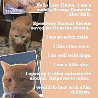 Adopt A Pet Petsmart Charities In 2020 Adoption Miniature Doberman Pinscher Pets