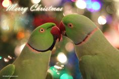 It's Anikin and Archimedes wishing everyone a Merry Christmas! :) Best Wishes, IMRAN-C
