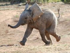 So happy and excited!  What a darling baby elephant!!!