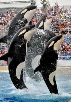 Sea World San Diego Theme Park Southern California