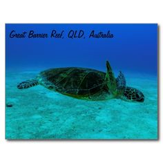 This cool postcard features a Hawksbill Sea Turtle swimming in the crystal blue waters of the Coral Sea on Australia's Great Barrier Reef. This photo was taken whilst the turtle was in open water away from the reef. #turtle #turtles #hawksbill #ocean #sea #nature #wildlife #seaturtle #hawksbillseaturtle
