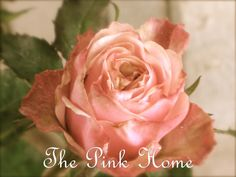 A lovely shabby chic-esque miniature pink rose.