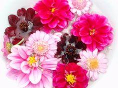 Galleri modern: Flower in my garden.. - just love it :-)