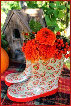 autumn brilliance ~ orange love ~ zinnia ~ rustic birdhouse ~ plaid wool blanket ~ thankful