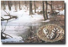 http://water.epa.gov  Eastern vernal pools are critical spawning areas for the Marbled Salamander (Ambystoma opacum, inset) and other amphibians.