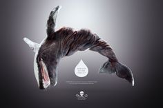 """Twisted Seals and Whales.  Great visuals made for a new campaign for Sea Shepherd. """"How far can we take it?"""""""