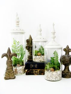 Decorative Terrarium Set: Woodland White Shabby Chic Jars with Live Plants. $150.00, via Etsy.