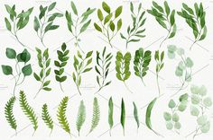 28 Watercolor Branches and Leaves by Helga Wigandt on @creativemarket