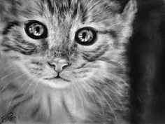 Výsledek obrázku pro kreslené obrázky tužkou kočky