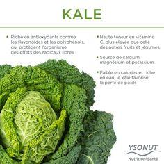 Les superfoods sont en vogue, le saviez-vous ? Aujourd'hui, nous vous en présentons un: le Kale.