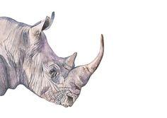 Hey, I found this really awesome Etsy listing at https://www.etsy.com/listing/198340526/rhinoceros-painting-rhinoceros-print