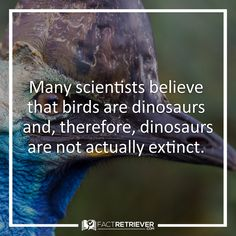 Most scientists believe that birds are a group of theropod dinosaurs that evolved during the Mesozoic Era Random Facts, Fun Facts, Dinosaur Facts, Largest Dinosaur, Prehistoric Creatures, Extinct, Zoology, T Rex, Scientists