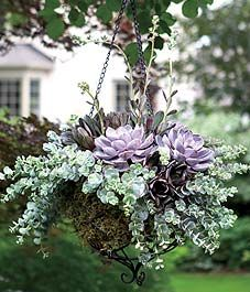 Stunning Succulent Gardens - The Cottage Market