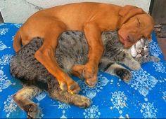 Bildergebnis für tierfreundschaften