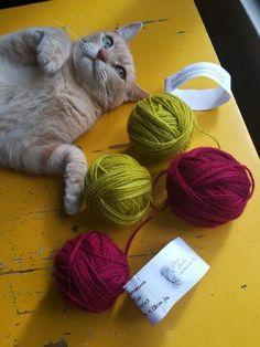 Villaneuleen viimeistelyä, pesua ja huoltoa - Villan salaisuus Cats, Animals, Gatos, Animales, Animaux, Animal, Cat, Animais, Kitty