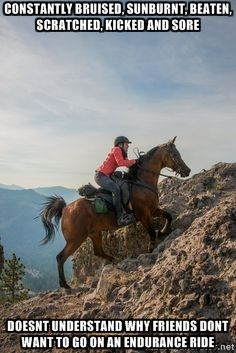 endurance horse quotes                                                                                                                                                                                 More