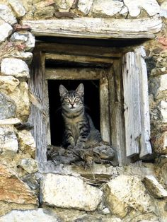 Best of Tabby Cats pictures: Cool Cats, Kittens Cutest, Cats And Kittens, Ragdoll Kittens, Tabby Cats, Funny Kittens, Bengal Cats, White Kittens, Black Cats