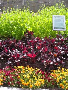 Mustard greens, 'Bull's Blood' beets and pansies in an edible design. Plus, coordinating signs with recipes on them.