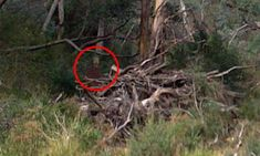 A man hiking near a local suicide spot in regional Queensland has snapped a picture of a shadowy figure that some claim is a ghost.