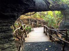 Bronx Zoo Congo exhibit