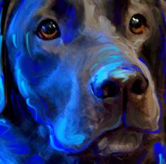 Black Lab Labrador Retriever Dog Art  Amazing art