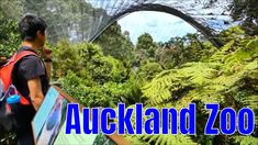 Auckland Zoo, New Zealand, Long version New Zealand Destinations, Auckland New Zealand, Great Places, Travel Guide, News, City, Cities, Tour Guide