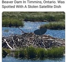 Beaver Dam In Timmins, Ontario. Was Spotted With A Stolen Satellite Dish... Beaver Dam, Satellite Dish, Types Of Humor, Biblical Verses, Happy Party, Morning Humor, Awkward Moments, Terms Of Service, Trending Memes