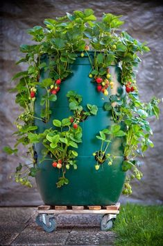 Strawberry Planters Diy, Planter Pots, Home And Garden, Rustic, Flowers, Plants, Decor, Design, Gardens