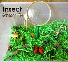 Insect Sensory Bin also lots of fun unit based activities