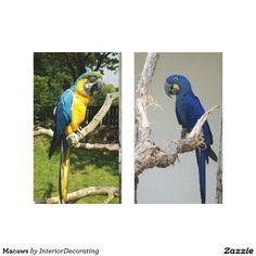 Macaws Canvas Print - animal gift ideas animals and pets diy customize Bird Wall Art, Wall Art Decor, Triptych Wall Art, Diy Stuffed Animals, Pet Gifts, Animals And Pets, Wall Decals, Canvas Prints, Gift Ideas