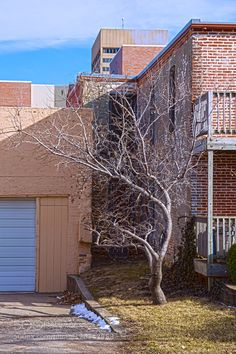 Winter tree downtown by ThomasKemper2