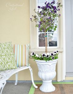 potted flowers - so pretty!  blue Potato Bush topiary trees and some 'Glamorama' pansies