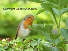 "ACEO British Nature Canvas Photograph 3.5 x 2.5"" - Robin Bird #2 in Art, Artists (Self-Representing), ACEO Art Cards 