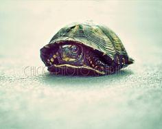 Tortoise Turtle Terrapin Photo Minimalist by ChicksPhotoGraphics, $15.00