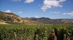 VIK - Holistic Vineyard, Millahue Chile