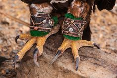 Eagle hunting in Mongolia 04