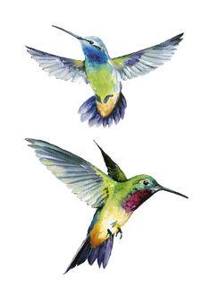 Joy Design Studio: Flower Painting_By Lisa item) Watercolor Hummingbird, Hummingbird Art, Watercolor Bird, Watercolor Paintings, Bird Drawings, Beautiful Birds, Pet Birds, Sketches, Illustration