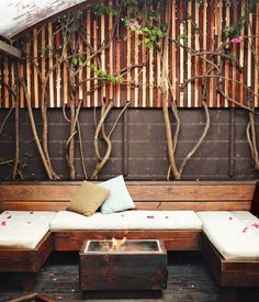 Patio with concrete and wood and climbing vines