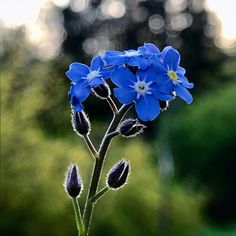 """Fräulein Nellüüü on Instagram: """"Gestern hatte meine Mum Ihren 60. Geburtstag. Eigentlich wären Sie in dieser Zeit in den Urlaub verreist. Daraus wurde leider nichts…"""" Flora, Plants, Instagram, 60 Birthday, Vacation, Plant, Planets"""
