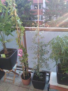 HOYA, s.o v Bratislava, Bratislavský kraj Bratislava, Balcony, Garden, Plants, Garten, Lawn And Garden, Balconies, Gardens, Plant
