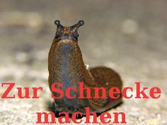 Make someone into a snail | German Phrases That Make No Sense In English