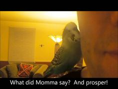 Disco The Talking Parakeet Talks to Daddy