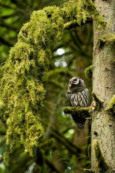 Beautiful owl & setting!