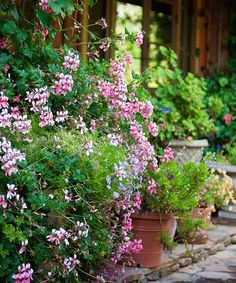 Until in-ground plantings mature, using a clutch of tightly arranged containers is a useful trick for drawing the eye away from a garden's bare spots toward a riot of concentrated color.