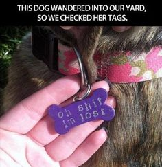 Possibly the best dog tag ever?