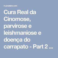 Cura Real da Cinomose, parvirose e leishmaniose e doença do carrapato - Part 2 - YouTube