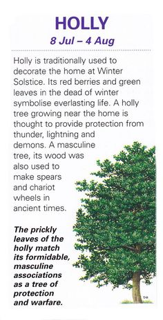 Trees Associated with Tuesdays – Holly   Witches Of The Craft®